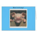 está sonriendo cerdo cómo que va tarjetas