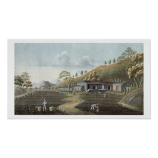 Establecimiento del té (w/c en el papel) póster