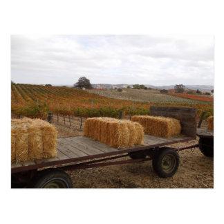Estación de la cosecha en Doce Robles, Paso Robles Postal