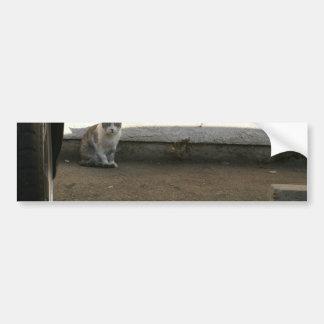 Estacionamiento polvoriento de los días del gato c etiqueta de parachoque