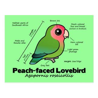 estadísticas Melocotón-hechas frente del Lovebird Tarjeta Postal