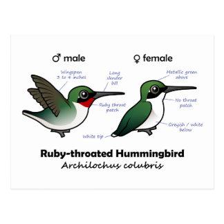 estadísticas Rubí-throated del colibrí Tarjeta Postal