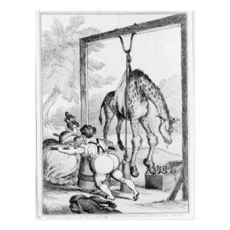 Estado de la jirafa, 1829 tarjetas postales