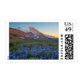 Estado de los E.E.U.U., Washington. Lupine alpino Sello