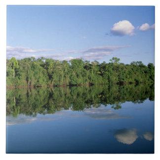 Estado de Mato Grosso el Amazonas el Brasil Bos Teja Cerámica