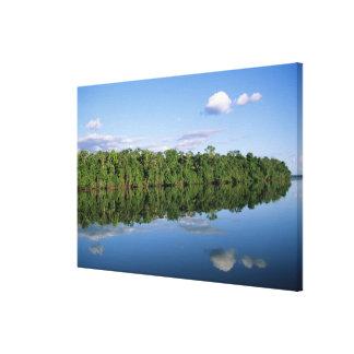 Estado de Mato Grosso, el Amazonas, el Brasil. Bos Impresión En Lona Estirada