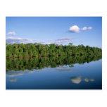 Estado de Mato Grosso, el Amazonas, el Brasil. Bos Tarjetas Postales