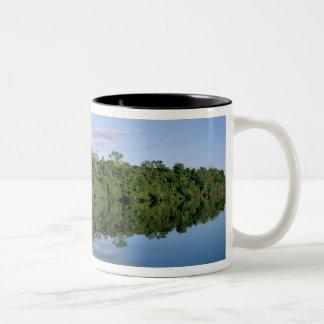 Estado de Mato Grosso, el Amazonas, el Brasil. Taza De Dos Tonos
