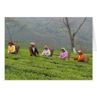 Estado del té de Sungama Bengala Occidental la I Felicitaciones
