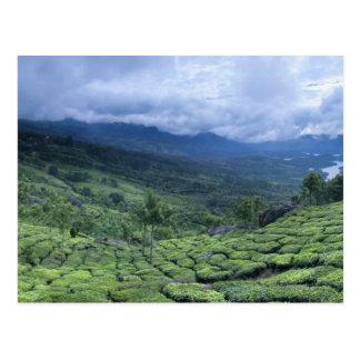 Estado la India de Kerala de la plantación de té 2 Postal