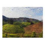 Estado la India de Kerala de la plantación de té Tarjeta Postal