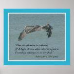 Estafa Pelicano Volando (cártel) del 91:4 de Póster