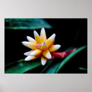 Estallar Bromeliad Impresiones