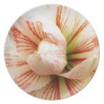 Estallar los pétalos de la flor del Amaryllis Plato De Comida