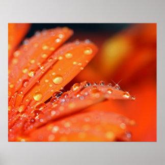 Estallido anaranjado póster