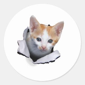 Estallido del gatito pegatinas