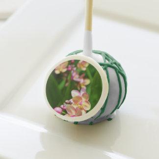 Estallidos de la torta del Orchidaceae