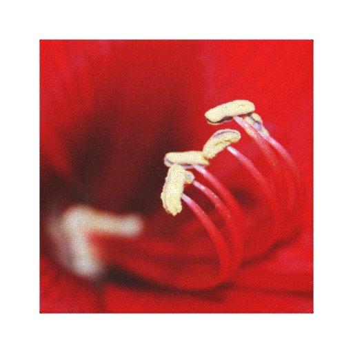 Estambre del baile de la macro roja de la flor impresiones en lienzo estiradas