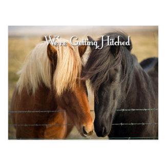 Estamos consiguiendo enganchados (dos caballos) postales