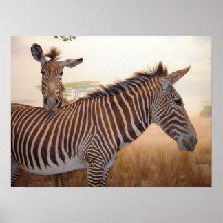 Estampado de animales - África - cebra Póster