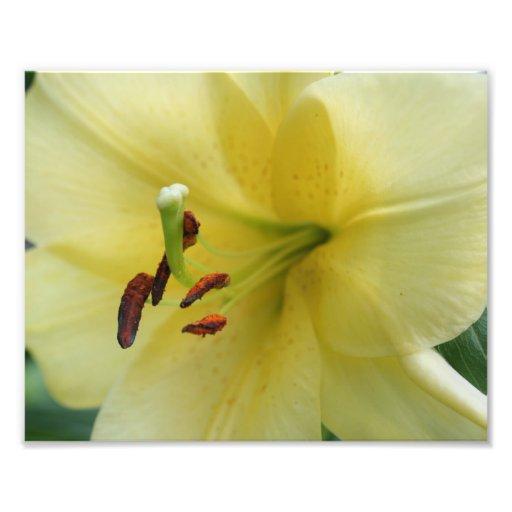 Estampado de flores amarillo macro de los pétalos fotografías