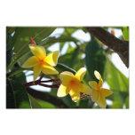 Estampado de flores amarillo tropical fotografía