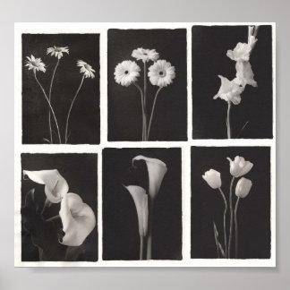 Estampado de flores blanco y negro posters