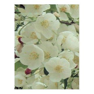 Estampado de flores de los brotes y de los flores