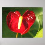 Estampado de flores del Anthurium Impresiones