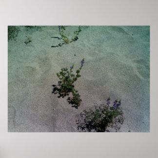 Estampado de flores del desierto posters