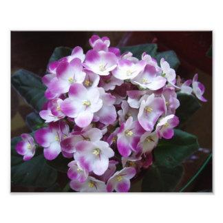 Estampado de flores impresionante arte con fotos
