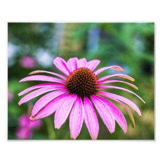 Estampado de flores púrpura del cono fotografías