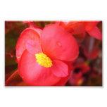 Estampado de flores rojo arte fotografico