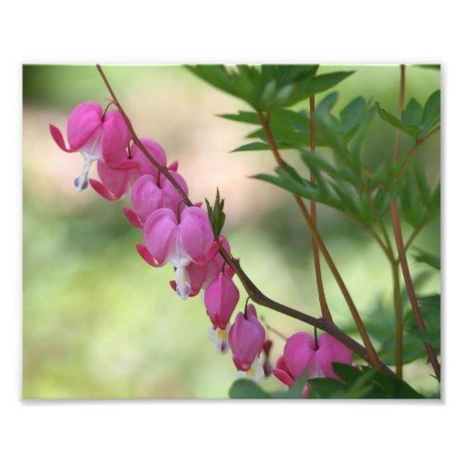 Estampado de flores rosado de la macro de los cora fotos