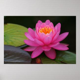 Estampado de flores rosado de Lotus Póster