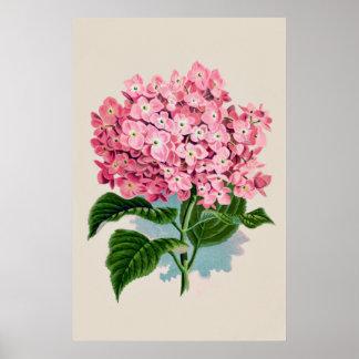 Estampado de flores rosado del Hydrangea del vinta Póster