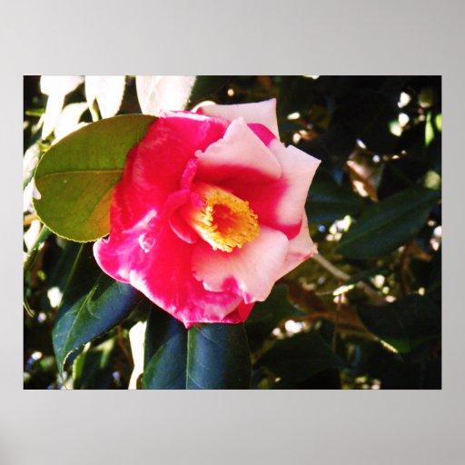 Estampado de flores rosado y blanco impresiones