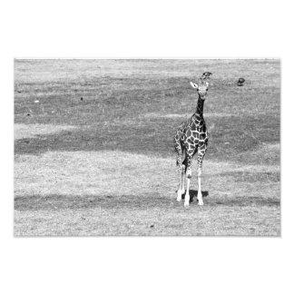 Estampado de girafa aislado fotografias