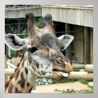 Estampado de girafa póster