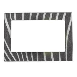 Estampado de zebra marcos magnéticos para fotos