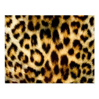 Estampado leopardo postales
