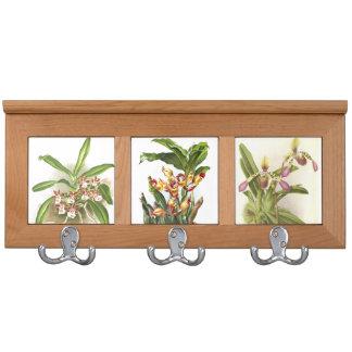 Estante botánico de la capa de las orquídeas