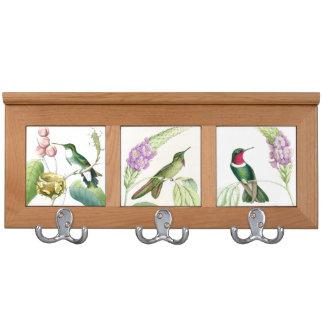 Estante de la capa de los colibríes de Goulds