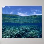 Estante del coral póster