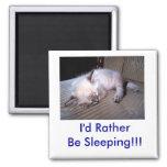 ¡Estaría durmiendo bastante!!! Imanes Para Frigoríficos