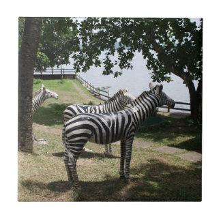 Estatuas de la cebra azulejo cuadrado pequeño