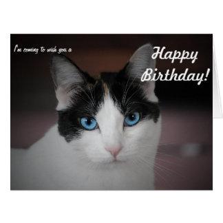 ¡Este gato whishes un feliz cumpleaños! Tarjeta