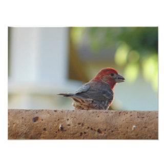 Este pájaro sabe sus actitudes… impresiones fotograficas