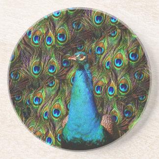 ¡Este pavo real le está mirando! Posavasos Manualidades