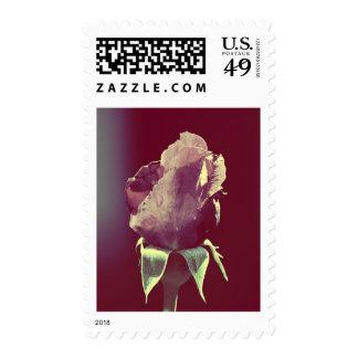 Este pequeño color de rosa sellos
